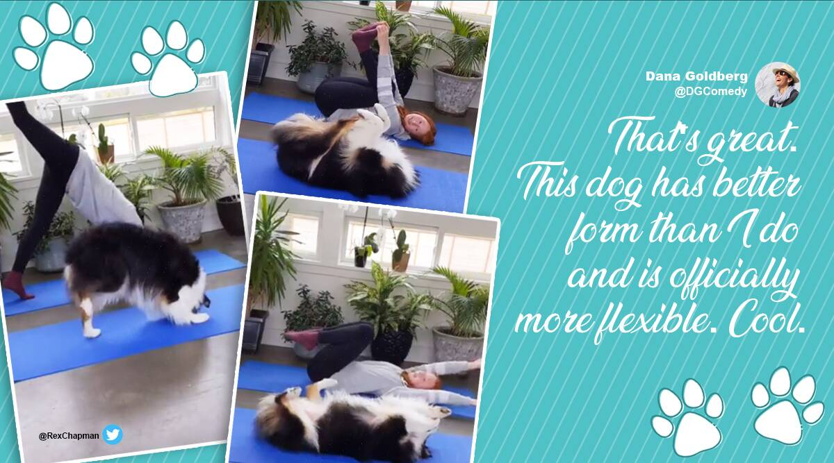 Dog doing yoga viral video, Dog and owner yoga session, my_aussie_gal Instagram, Dog videos, Dog and owner videos, secret the Australian shepherd videos, Trending news, Australian shepherd dog videos, Viral videos, Indian Express news