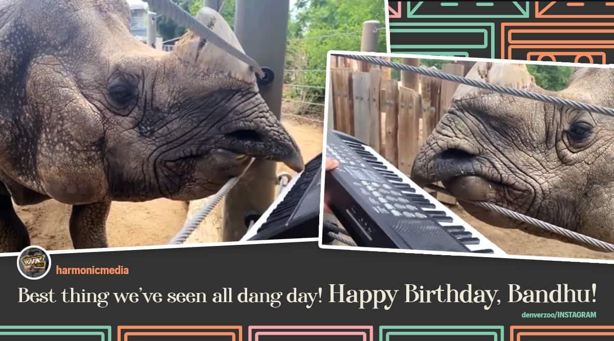 Denver Zoo rhino playing keyboard for birthday, rhino playing keyboard viral video, rhino playing keyboard for 12th birthday, Denver zoo Instagram, Colarado, Viral video, Trending news, Indian Express news