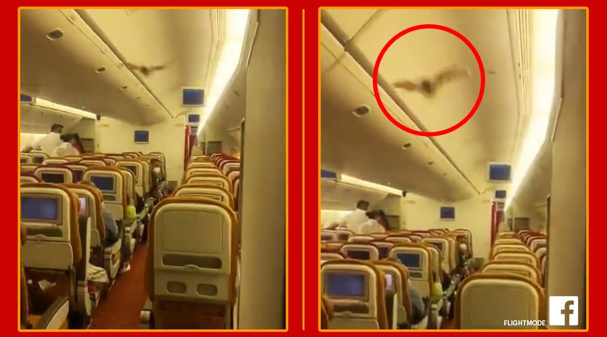 air india aircraft, Bat, Air India, Air India bat, animals, Delhi, Trending video, Trending news, Indian express news