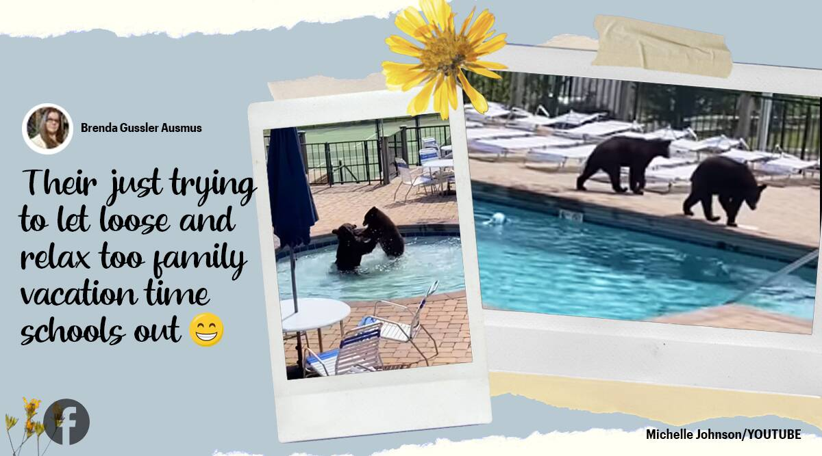 Crazy Video Shows Black Bear Crashing Pool Party in