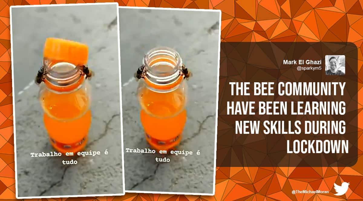 bees open bottle cap, fanta bottle cap bees open, bees unscrew fanta bottle, two bees unscrew soft drink bottle, viral video, odd news, indian express