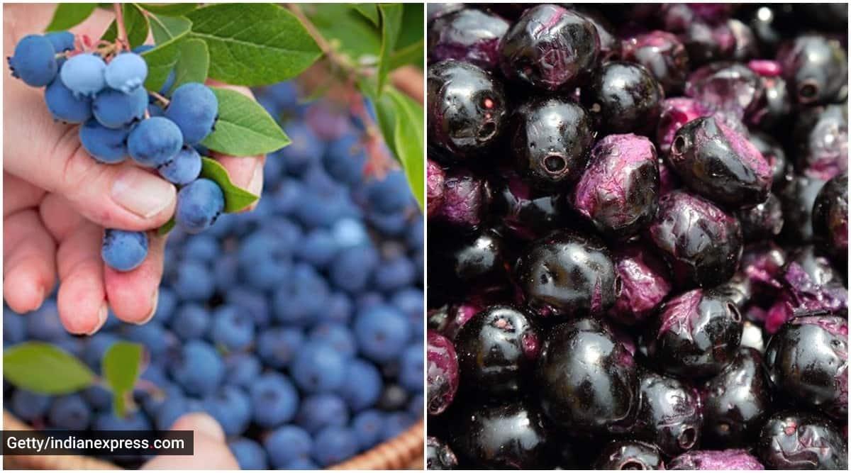 blueberries vs kala jamun, kala jamun benefits, blueberries benefits, indianexpress.com, indianexpress, blueberries vs kala jamun benefits, summer fruits,