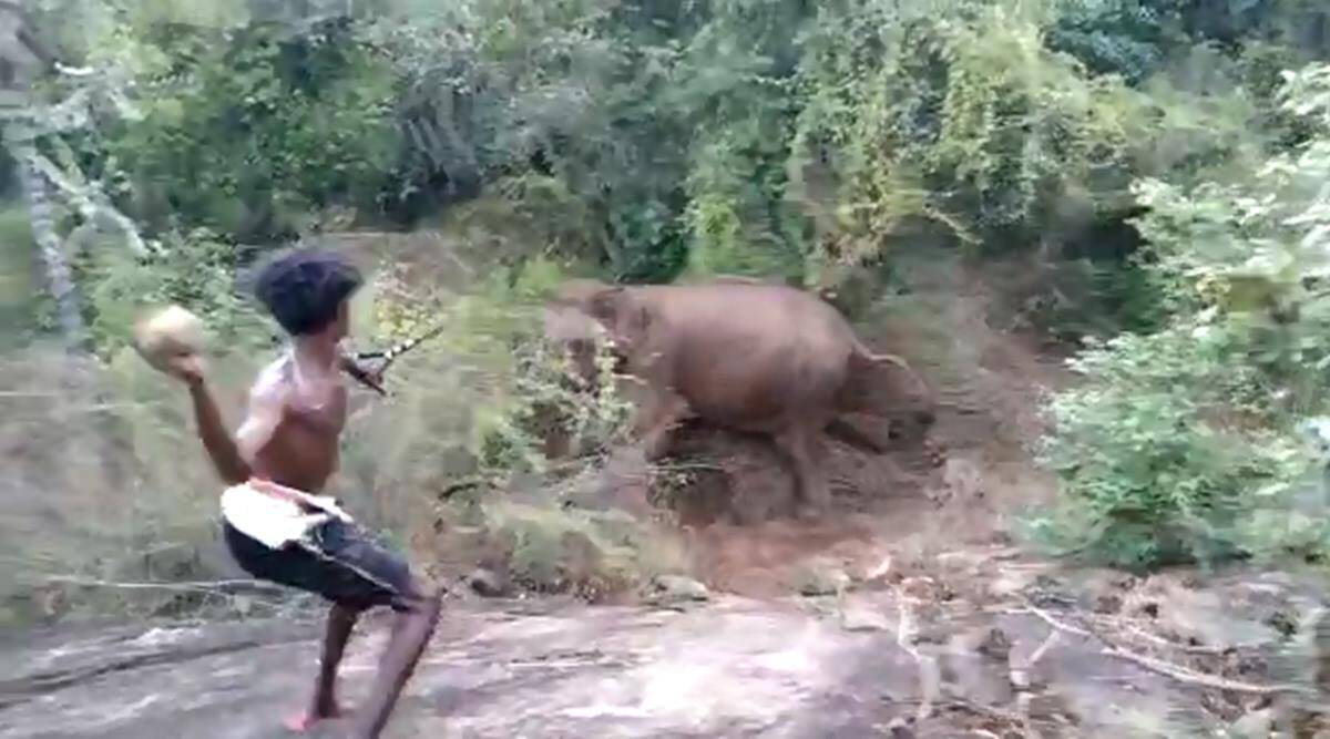 wild elephants attacked, youth held for attacking elephants, Thirumoorthy dam, Tiruppur forest, tamil nadu elephants, Tiruppur elephants