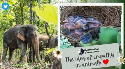 Elephants destroy over 300 banana tress, leave one with a bird's nest untouched. Watch viral video