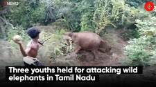 Three youths held for attacking wild elephants in Tamil Nadu