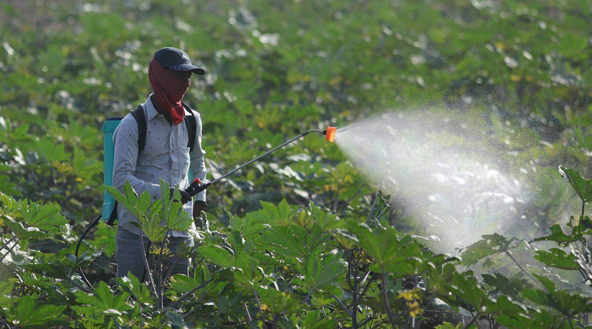 Government hikes subsidy on DAP fertiliser by 140%; farmers to get DAP at old rates