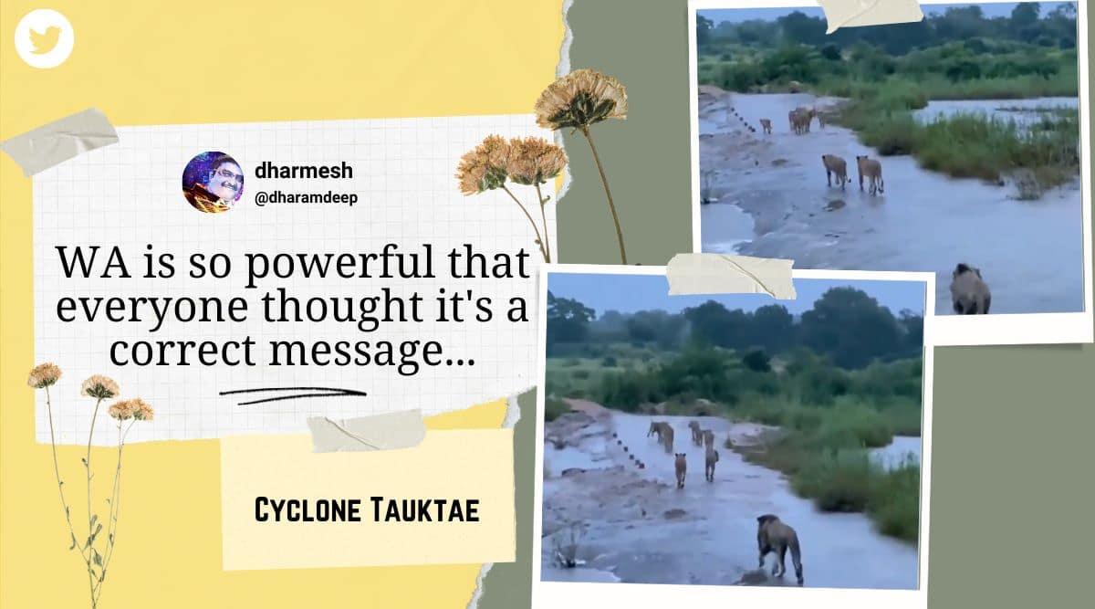 Cyclone Tauktae, Cyclone Tauktae gujarat, Cyclone Tauktae gir forest, gir lions Cyclone Tauktae, fake gujarat lion Cyclone Tauktae, gujarat forest department fake video, indian express