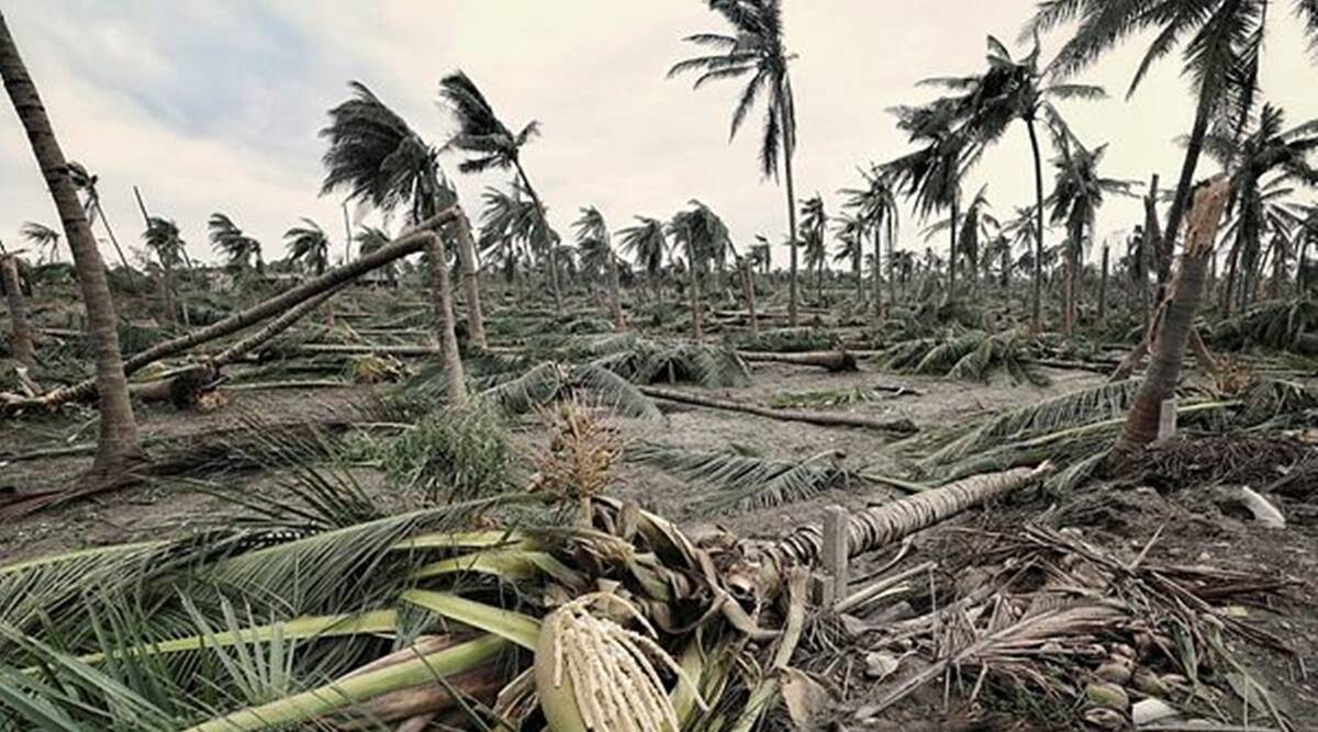 Gujarat: Teams of agricultural scientists to try restore trees damaged in Cyclone Tauktae