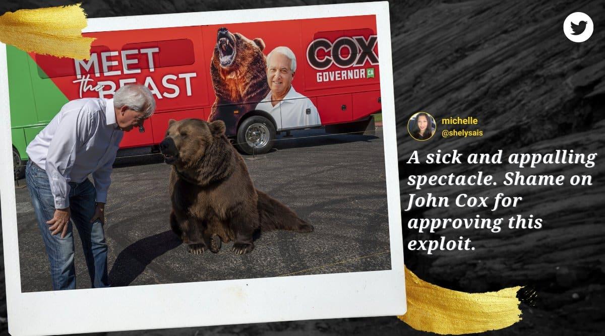 john cox, john cox bear campaign, California governor recall election, john cox ad campaign, cox tag bear ad, indian express
