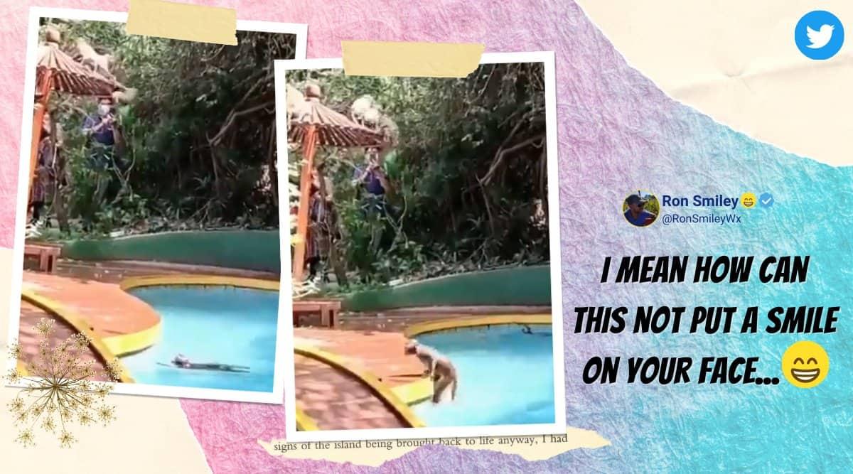 monkey swimming pool, monkey enjoy swimming pool, monkey take over pool in lockdown, mahabaleshwar resort monkey pool, viral videos, indian express