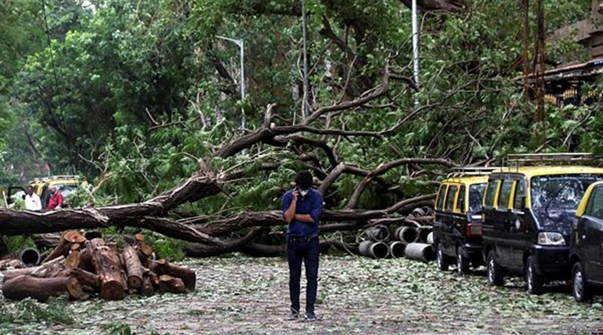 Trees shouldn't be planted on footpaths, indigenous species should be planted in city: Mumbai Mayor