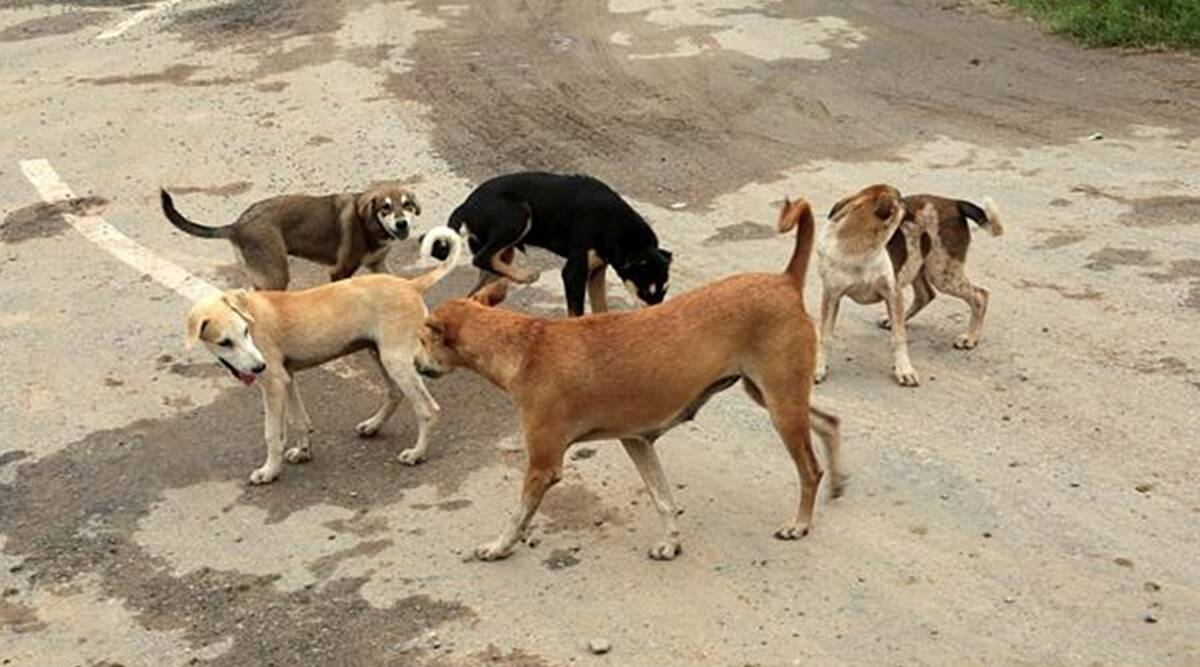 Naveen Patnaik sanctions additional Rs 60 lakh for feeding stray dogs, cattle during lockdown