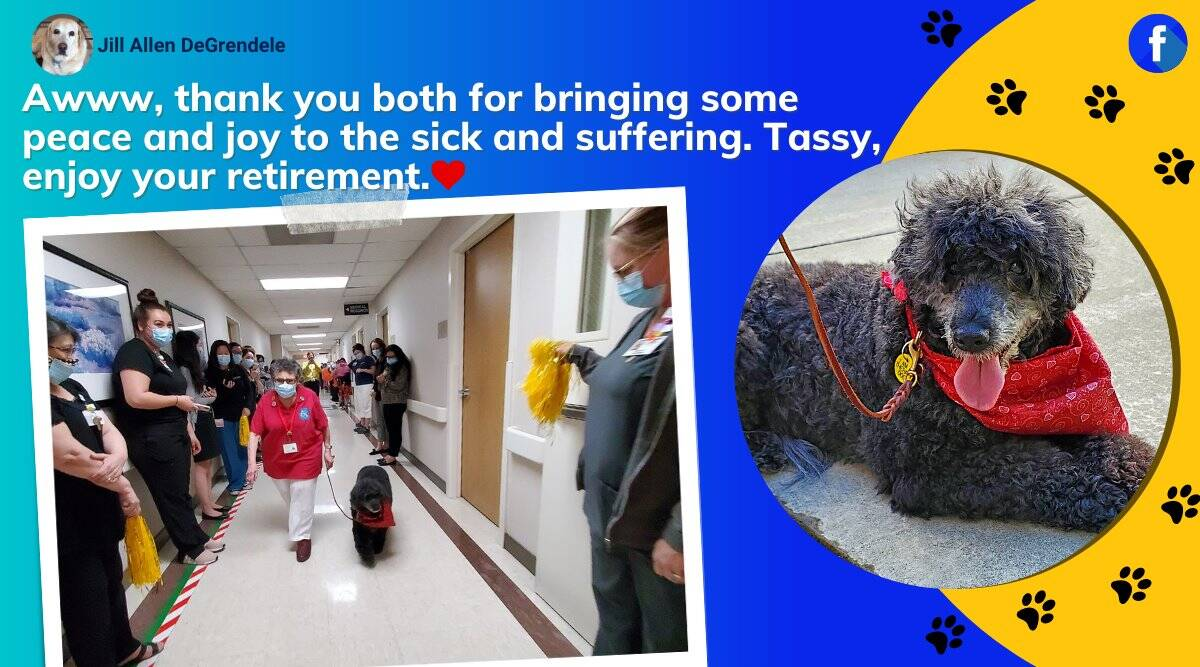dog retirement party, therapy dog retirement party, california dog farewell party, Doctors Medical Center tassy retirement, viral videos, indian express