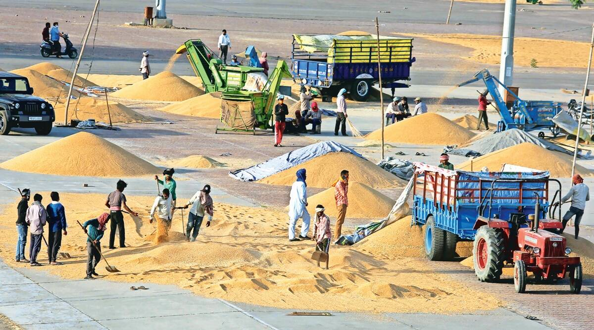 Riding on direct payment, Punjab wheat procurement hits new high