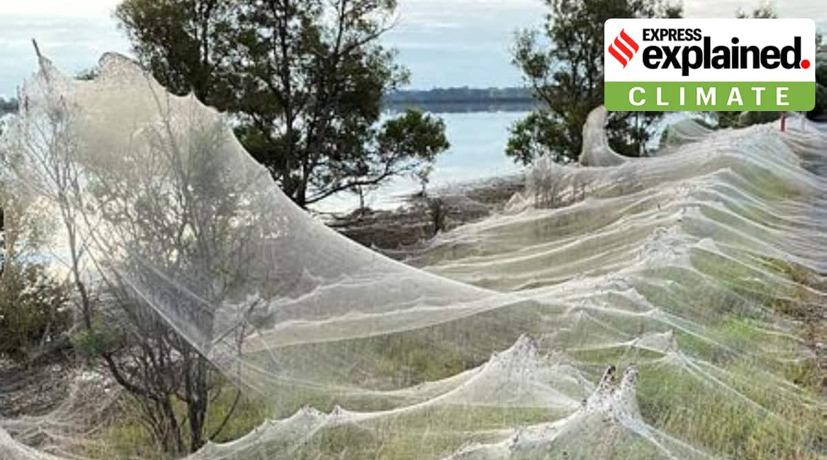 Australia spider web explained