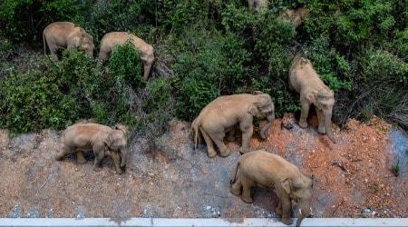 China, Asian elephants