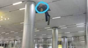 Hyderabad airport, Hyderabad news, Hyderabad airport news, Plumber dies at Hyderabad airport, Indian express