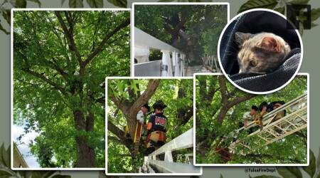 Cat and owner stuck in tree, cat rescue, cat and owner rescue, Tulsa, Oklahoma, Viral video, Indian Express news