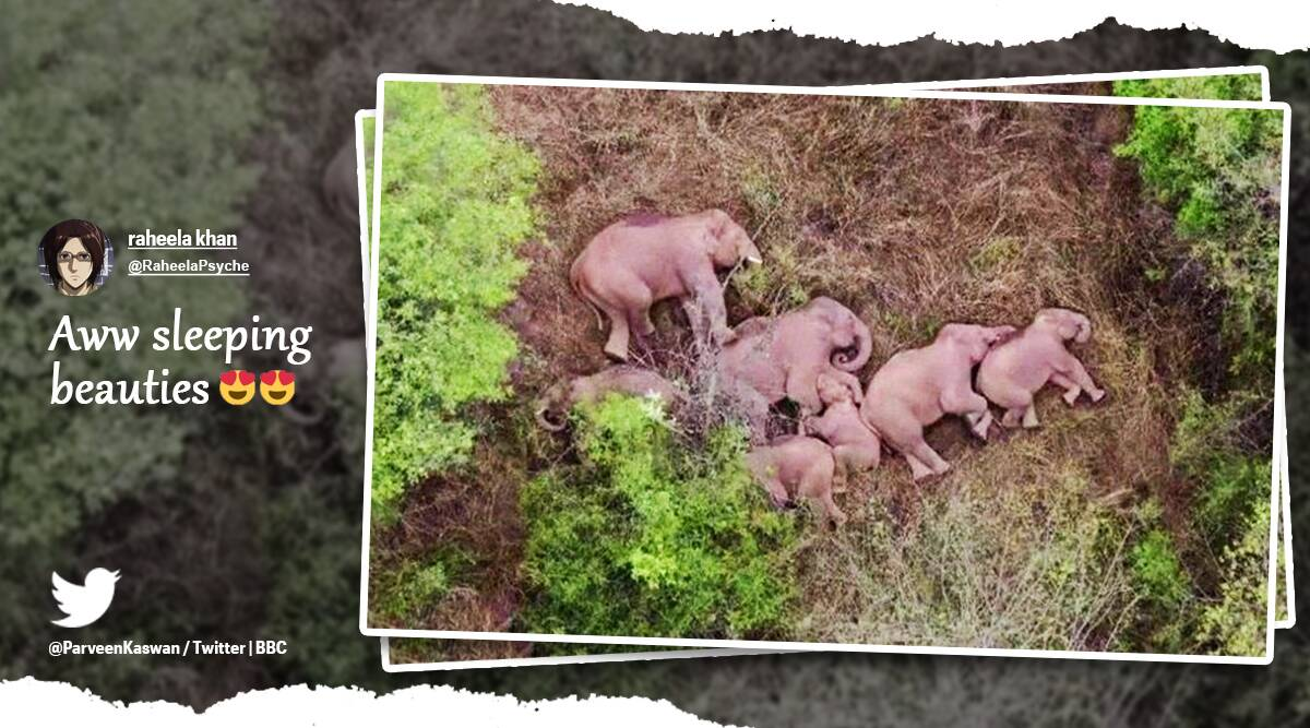 'Well deserved rest': Wandering herd of elephants in China spotted taking a nap