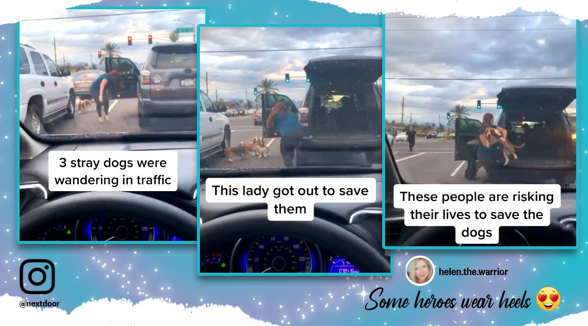 Woman rescue dogs wandering in traffic, dogs wandering in traffic, woman rescues dog, woman in heels rescues dogs, dogs wandering in traffic rescued, viral video, trending news, viral news, Indian Express news, dog rescue videos