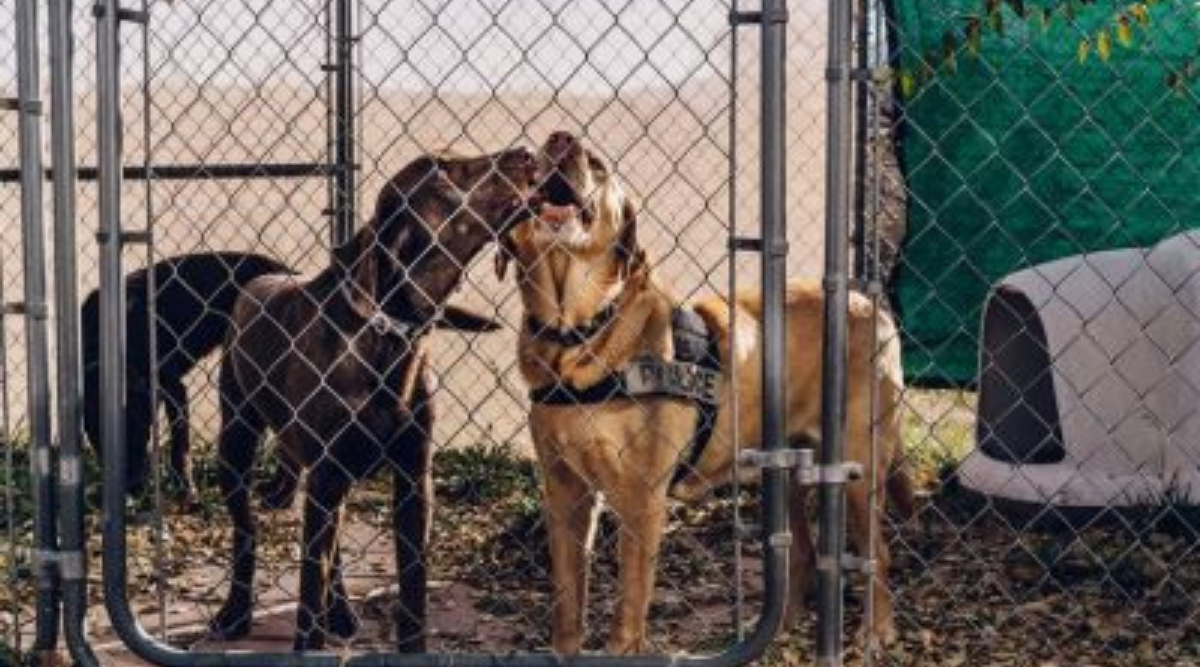 Covid-sniffing dogs are accurate but face hurdles for widespread use