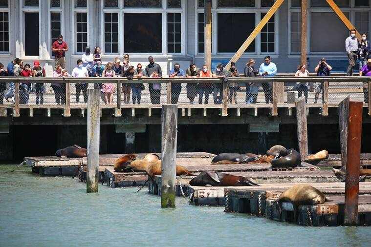 Climate change, ecological crisis, Japan, San Francisco, Earthquake, Pacific Ring of Fire, Natural Disaster, sea lions, marine life, Tsunami, US news, Japan news, Biden Administration, Infrastructure development, sea beds, Pacific Ocean,
