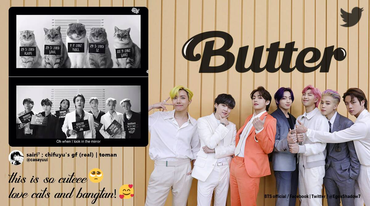 Best cover' Someone made a cat version of BTS song 'Butter', and ...