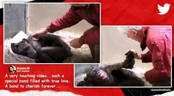 Anand Mahindra chimpanzee viral video, Anand Mahindra tweets dying chimp viral video, epoch times, animal stories, twitter reactions, indian express, indian express news