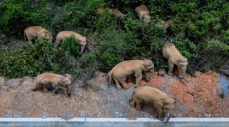 China tries to keep elephant herd out of city of 7 million