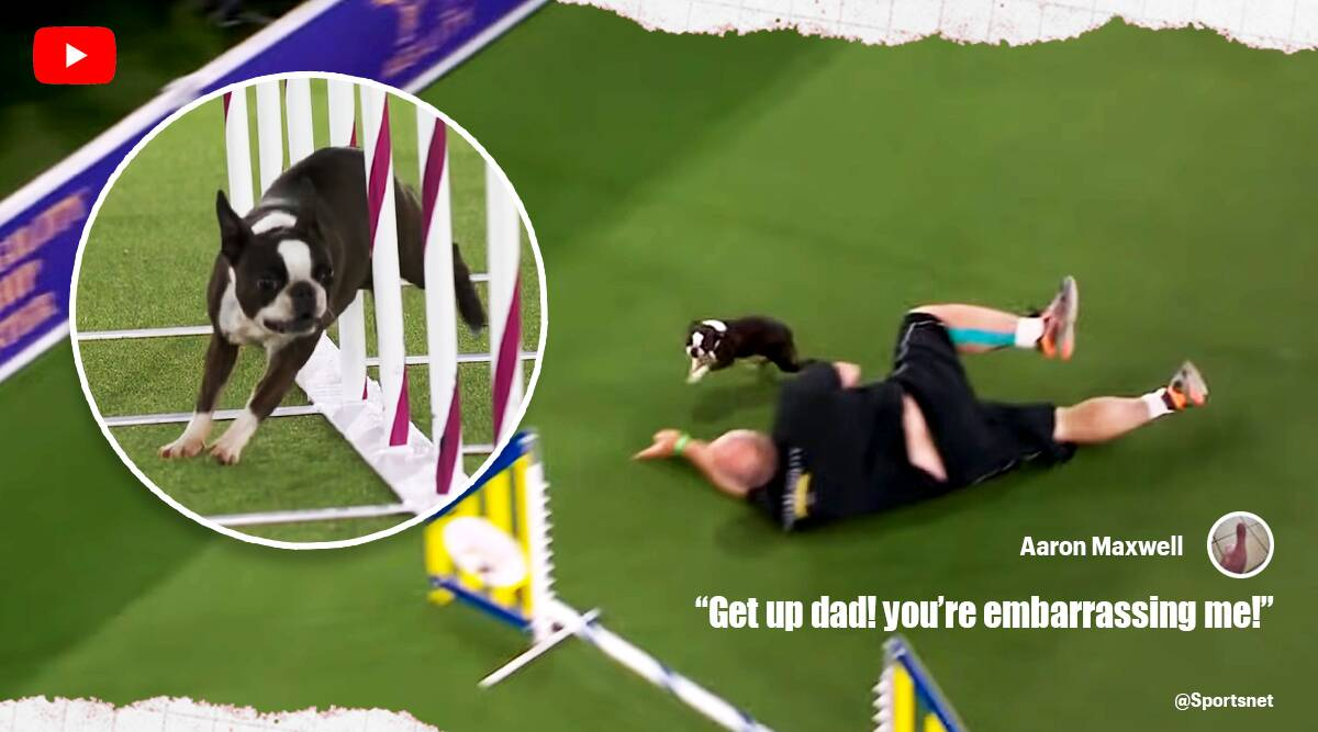 Boston terrier owner falls viral video, Westminster Dog Show agility competition, viral video, funny clips, twitter reactions, indian express, indian express news