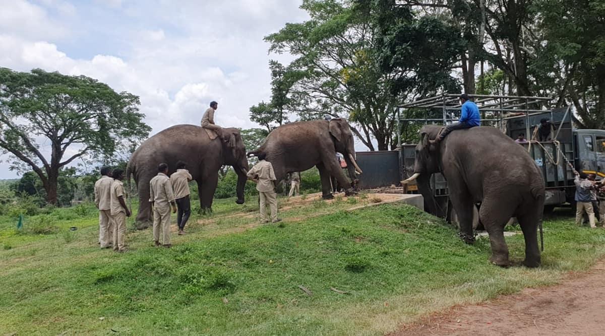 elephant, Kusha, captive elephant