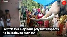 Watch this elephant pay last respects to its beloved mahout
