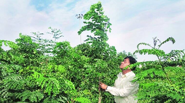 Gujarat: KASEZ becomes 'first green industrial city' in India
