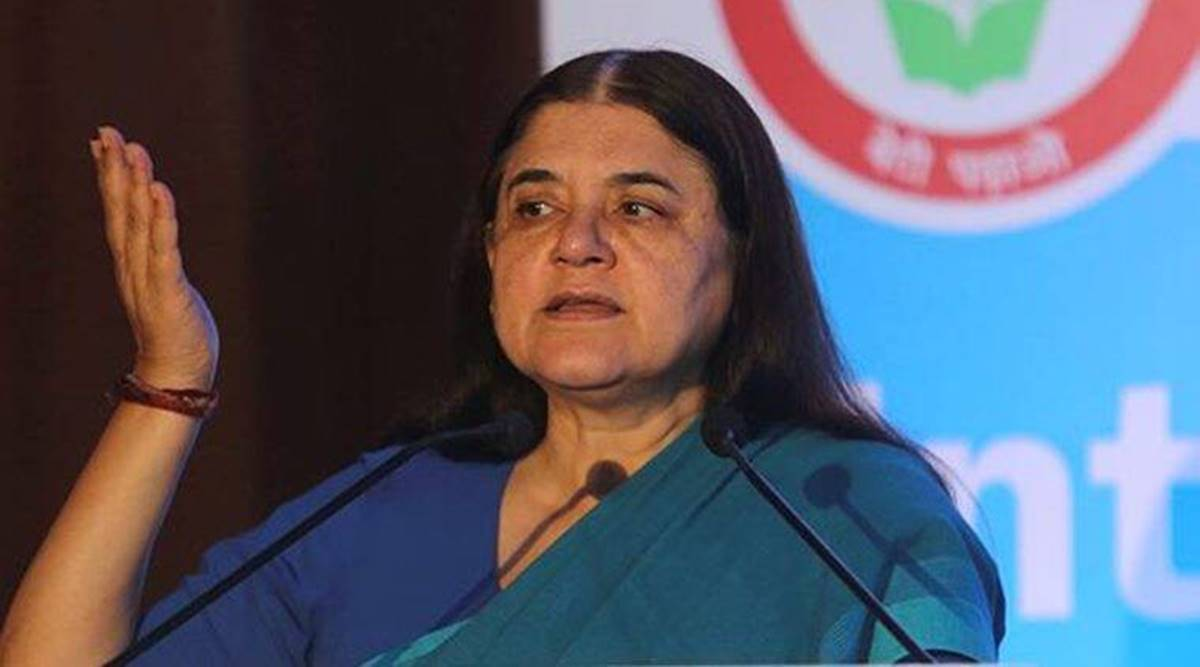 Former Minister and BJP MLA Ajay Vishnoi Saturday hit out at Maneka Gandhi and said he is ashamed that she is a BJP MP.
