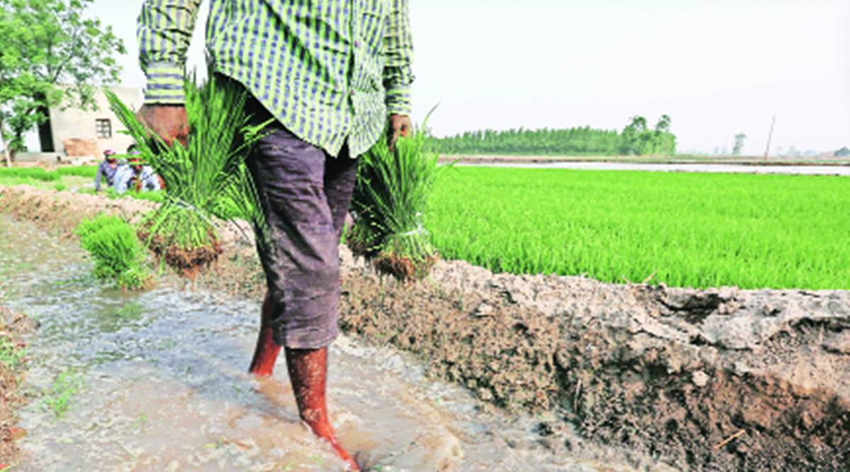 Punjab seeks to bring 10 lakh hectares under direct seeding, one quarter of target achieved