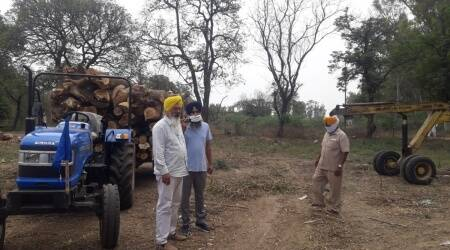 NGT asks Punjab forest conservator to probe, take action against those who axed 1,065 trees on Faridkot sugar mill premises