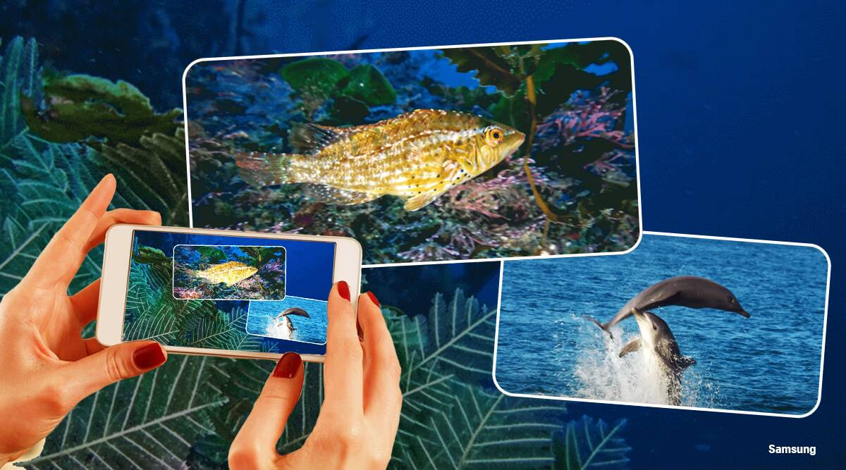 samsung, world ocean day, galaxy S21 Ultra, underwater photography, oceans, dong-sik Kim, Kim dong sik, water photography, Samsung photography, trending news, Indian Express news