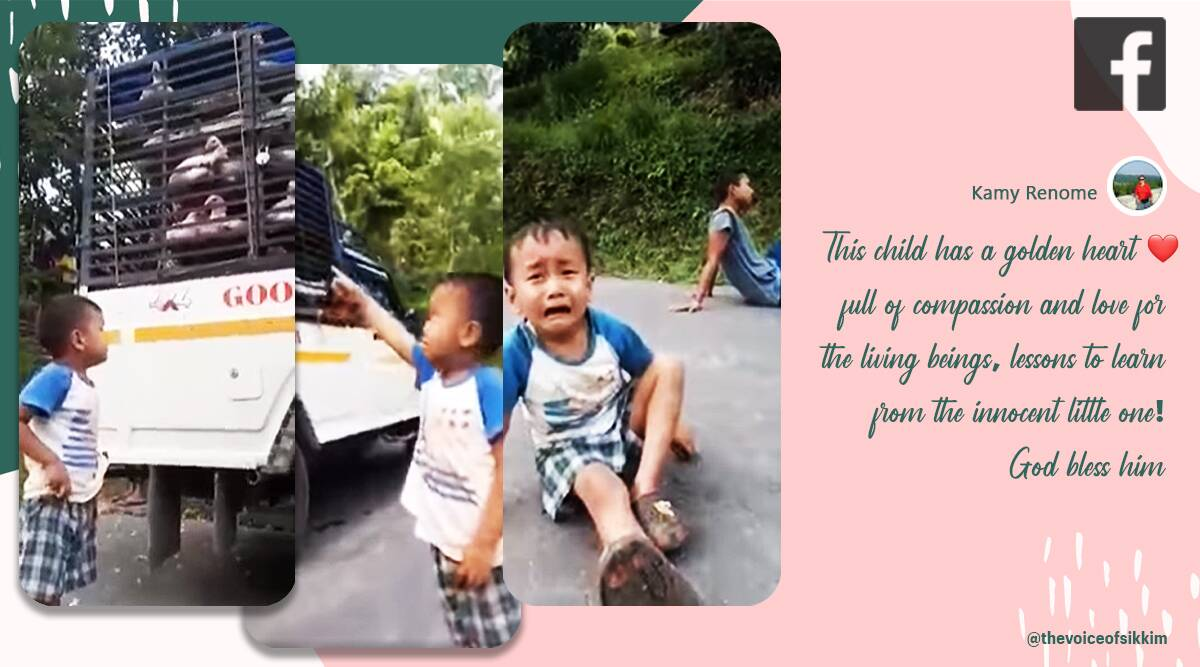 boy cry for chickens, sikkim boy cry over chickens, boy reaction chickens taken for slaughter, chicken taken for slaughter boy cries, viral news, sikkim news, indian express