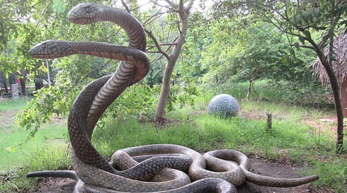 chennai snake park, chennai snake park shut, covid news chennai, chennai news, covid tamil nandu, indian express