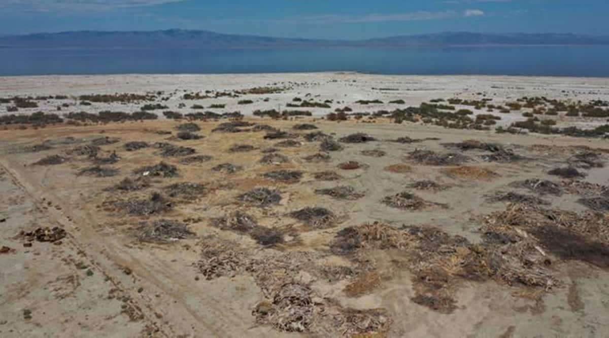 An aerial view shows dead palm trees on the beach near the Salton Sea