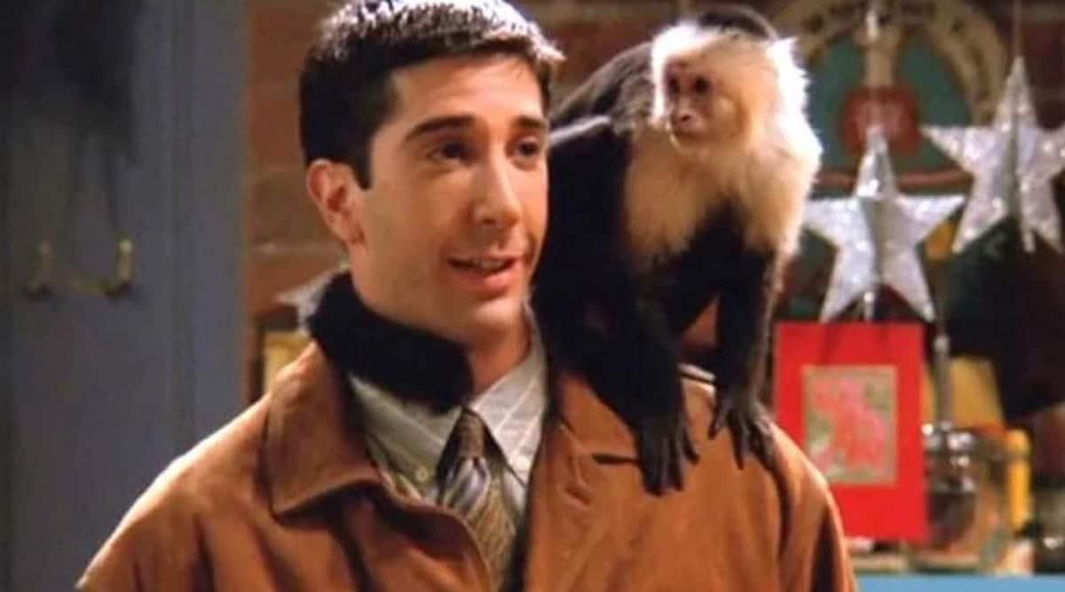 David Schwimmer, David Schwimmer friends, David Schwimmer monkey
