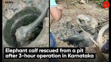 Elephant calf rescued from a pit after 3-hour operation in Karnataka