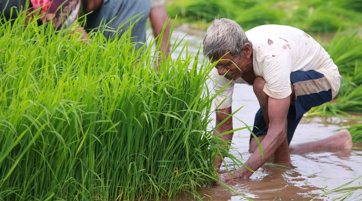Kharif sowing completed in 70% of area as state witnesses uneven rainfall