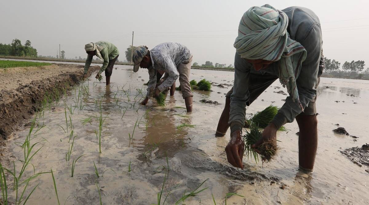 Bangladesh rice farmers invent new varieties to withstand salt, storms thumbnail