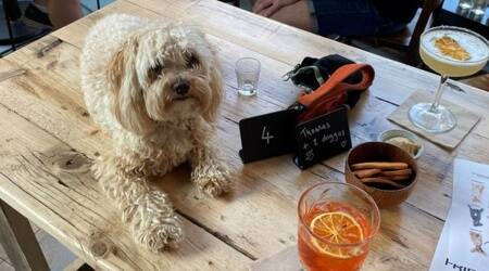 cocktails for dogs, dog love, cute dog pictures