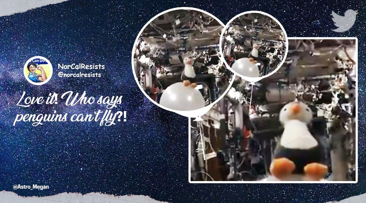 Astronaut Megan McArthur, Guin Guin penguin toy, ISS, Megan McArthur Twitter, Guin Guin penguin toy experiment in space, Guin Guin penguin toy in space, Viral video, Viral news, Indian Express news