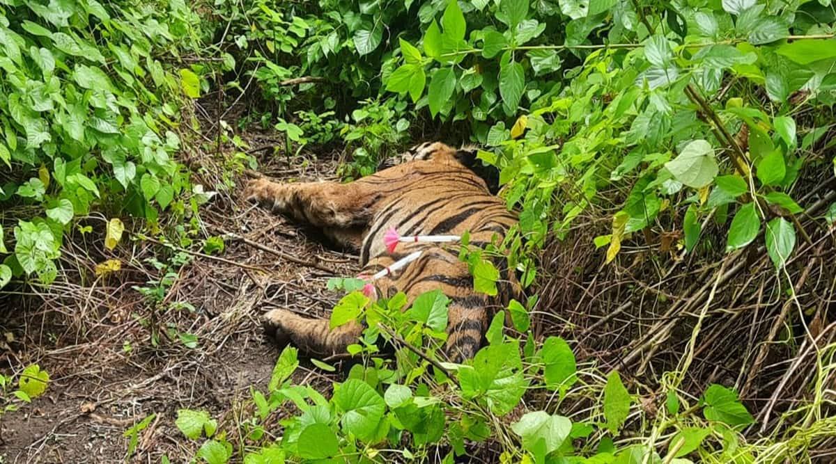 Tiger died in Karnataka