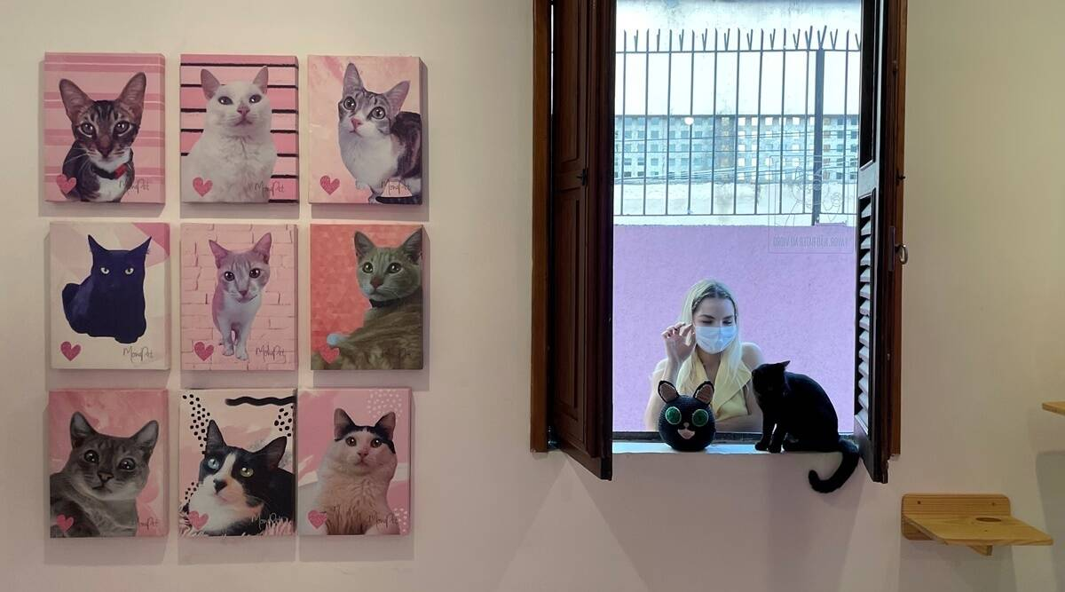 Woman at cat cafe