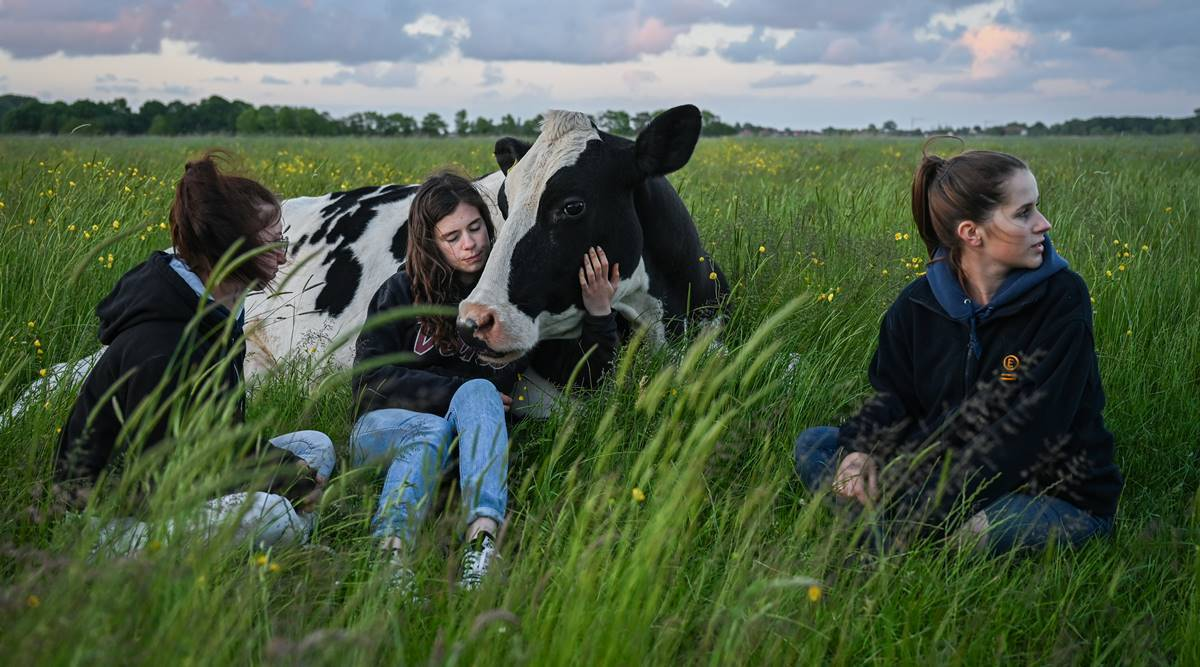 On this German farm, cows are in charge. Or at least coequals.