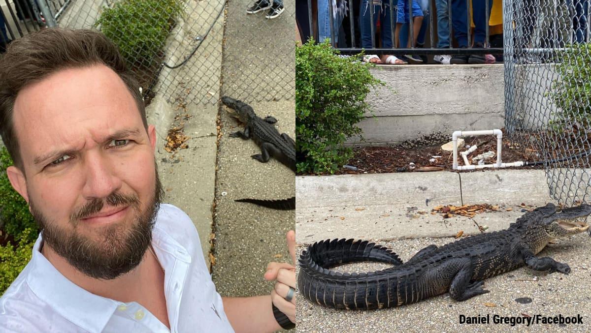 alligator Florida, alligator wanders in florida, alligator church Florida, alligator church, alligator storm drain, crocodile, reptile videos, viral videos, trending videos, trending news, Indian Express news